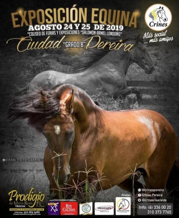 http://suscaballos.com/Exposición Equina Grado B Ciudad de Pereira, 24 y 25 de Agosto