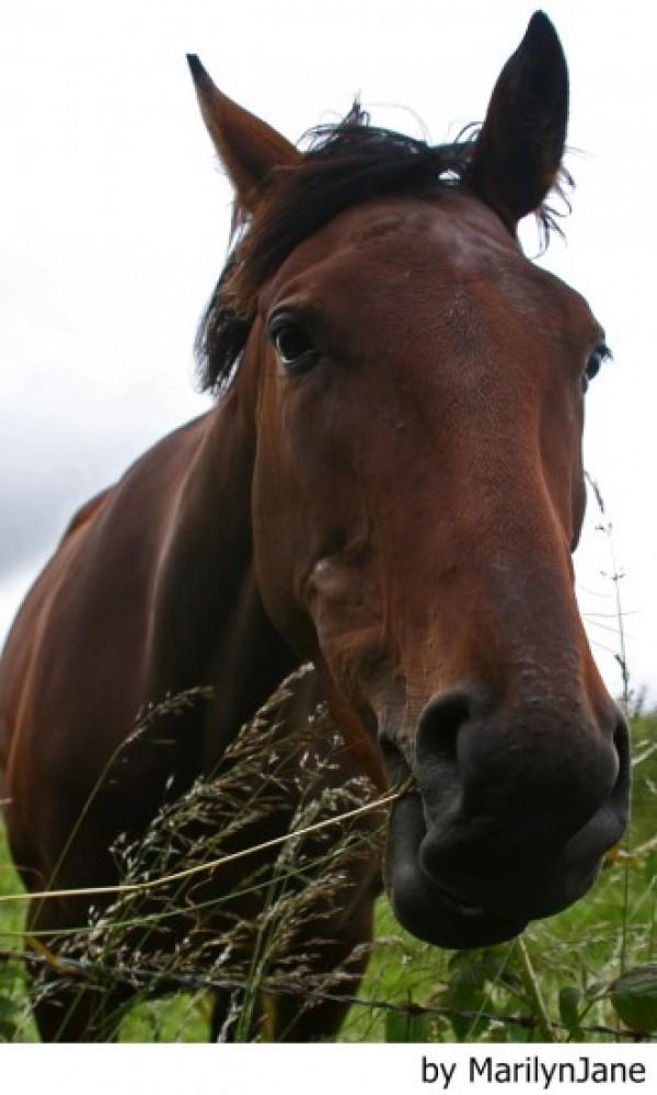 http://suscaballos.com/El dolor: causa de problemas de comportamiento en caballos