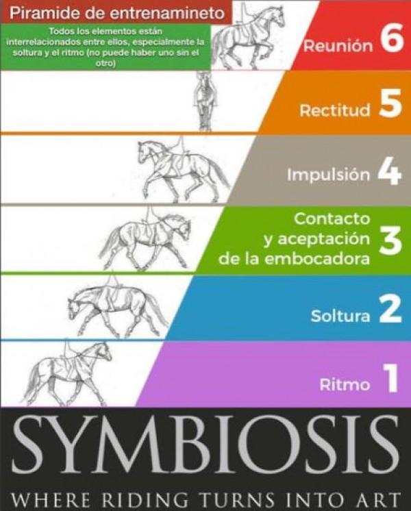 http://suscaballos.com/Pie a tierra, los fundamentos de la educación de tu caballo