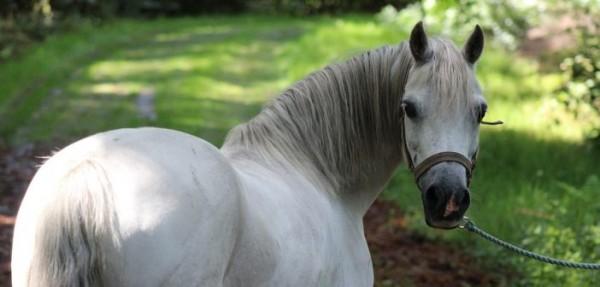 http://suscaballos.com/Los caballos disminuyen el número de parpadeos cuando están estresados