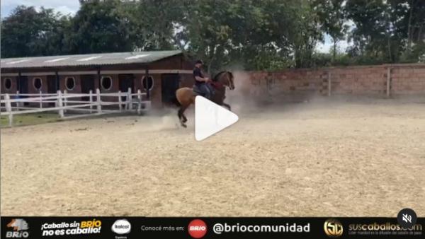 https://suscaballos.com/Video: Galeón de @criaderoa.santa