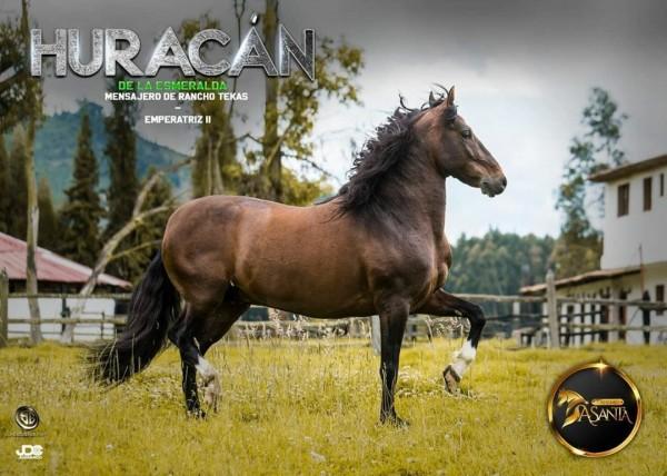 http://www.suscaballos.com/Huracan de La Esmeralda, el múltiple campeón hijo de Mensajero de Rancho Tekas