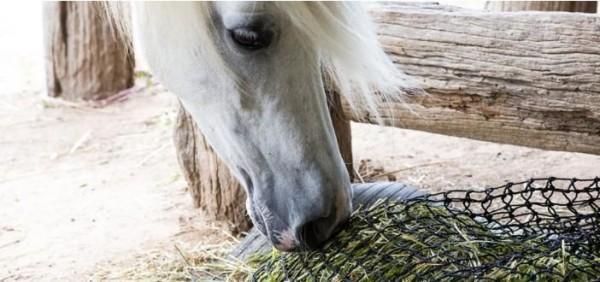 https://suscaballos.com/Ralentiza la alimentación de tus caballos durante la noche