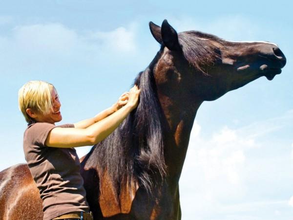 https://suscaballos.com/Siete zonas placenteras para acariciar a tu caballo