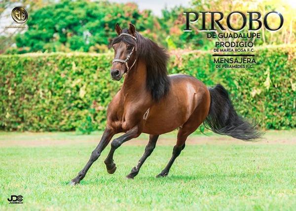 http://suscaballos.com/Gran promoción de lanzamiento de @pirobodeguadalupe a tan solo 600.000 pesos.