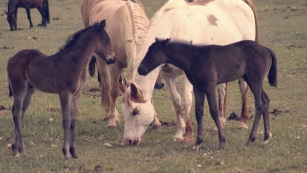 http://suscaballos.com/La importancia de la socialización para el caballo de deporte