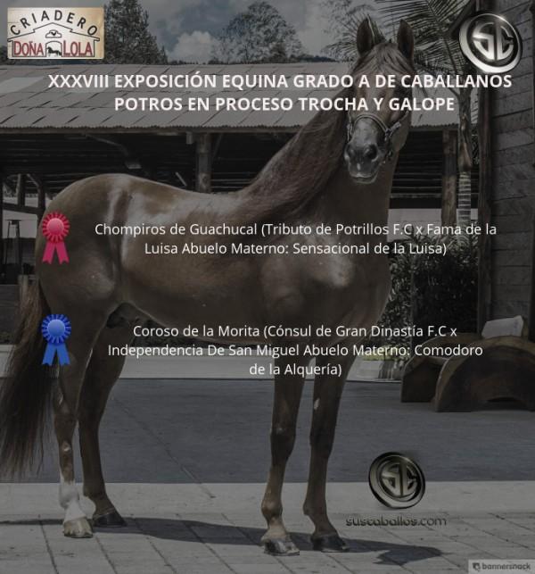 http://www.suscaballos.com/VÍDEO: Chompiros Mejor, Coroso 1P, Potros Trocha Y Galope, Caballanos 2018