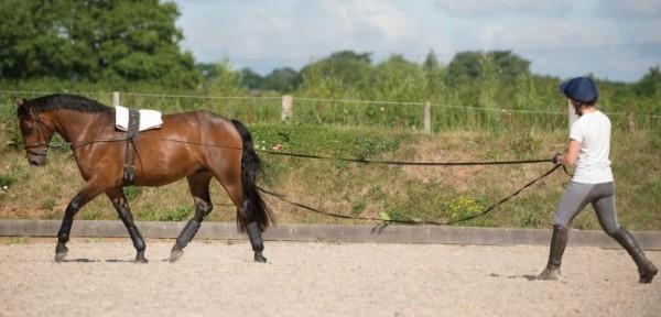 http://www.suscaballos.com/Los caballos que se entrenan habitualmente pie a tierra, cuando se montan están más relajados