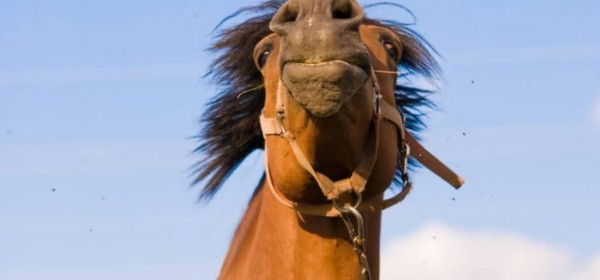 http://suscaballos.com/¿Está tu caballo de humor para aprender?