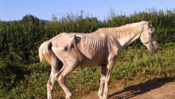 http://suscaballos.com/Rehabilitar nutricionalmente a los caballos abandonados