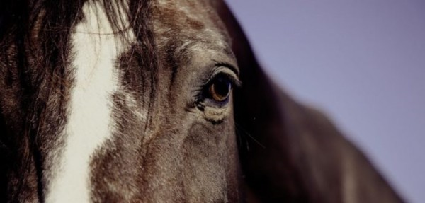 https://suscaballos.com/Lo que revelan las arrugas de los ojos de los caballos sobre su estado emocional