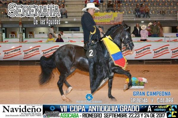http://suscaballos.com/VÍDEO: Serenata Campeona, Algarabía Reservada, Trocha Y Galope, VII Copa Ant.