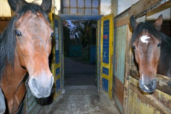 http://suscaballos.com/Los equinos necesitan también atención veterinaria especial durante el estado de alarma por el Coronavirus
