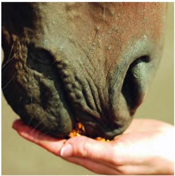 http://suscaballos.com/Utilización digestiva del almidón en Equinos