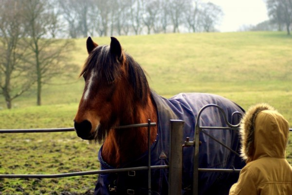 http://suscaballos.com/5 claves del cuidado y bienestar del caballo