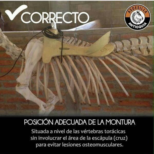 http://www.suscaballos.com/Posición Adecuada De La Montura!!