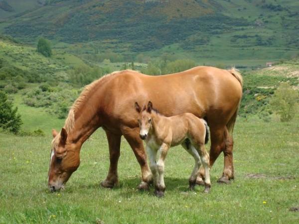 http://suscaballos.com/El caballo no come bien