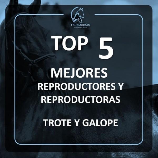 http://suscaballos.com/Top 5 mejores reproductores y reproductoras en el andar de Trote y Galope