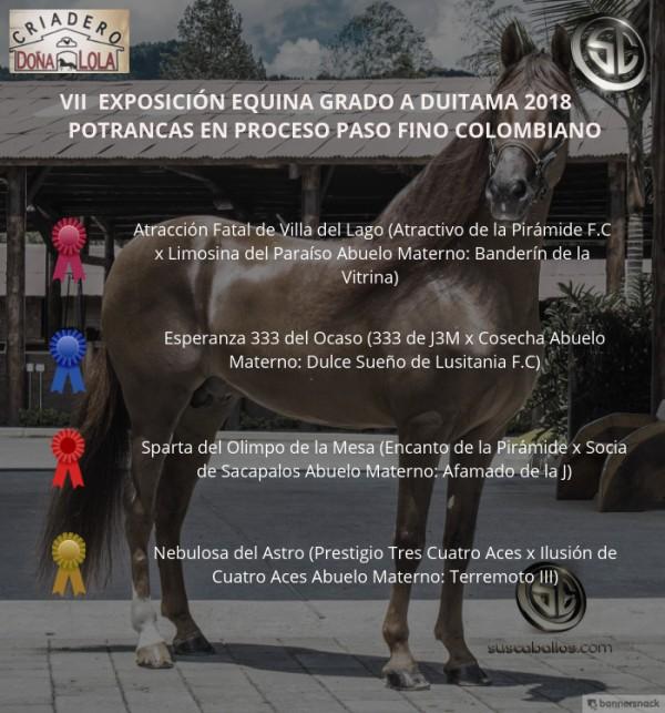https://suscaballos.com/VÍDEO: Atracción Mejor, Esperanza 1p, Potrancas Paso Fino Colombiano, Duitama