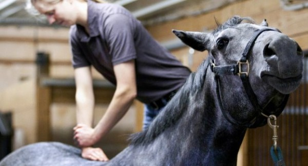 http://www.suscaballos.com/La quiropráctica moderna aplicada al caballo