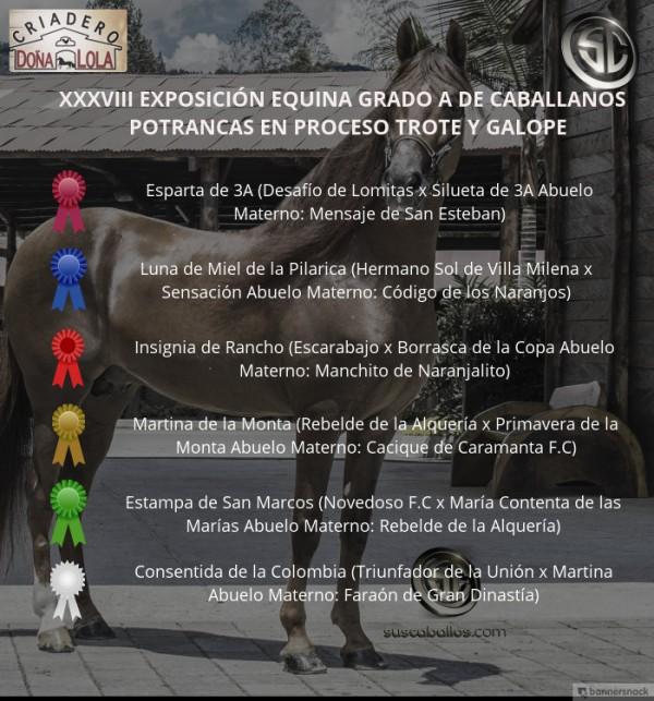 http://www.suscaballos.com/VÍDEO: Esparta Mejor, Insignia 1P, Potrancas Del Trote Y Galope, Caballanos 2018