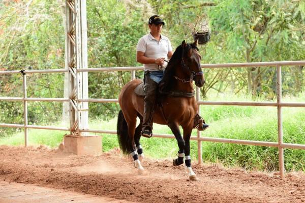 https://suscaballos.com/Colombia tiene 2 (y no una) especies de caballo criollo, revela estudio genético