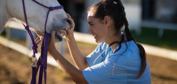 https://suscaballos.com/Las características dentarias de los caballos