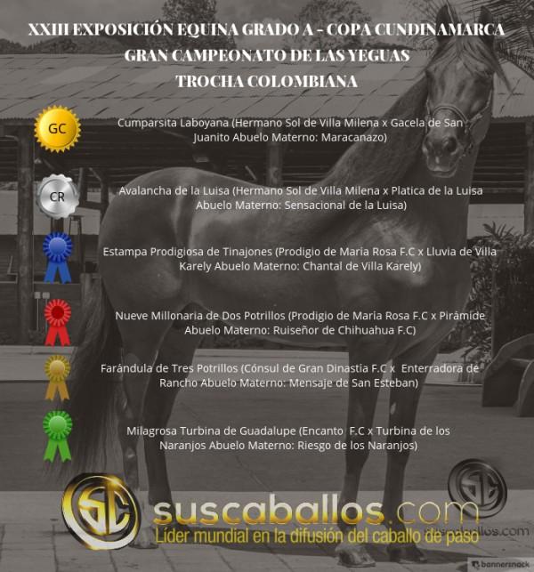 http://suscaballos.com/VÍDEO: Cumparsita Campeona,Avalancha Reservada, Trocha, Copa Cundinamarca