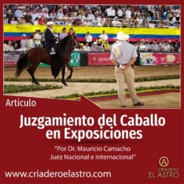 https://suscaballos.com/Juzgamiento del Caballo de Paso Fino en Exposiciones Equinas