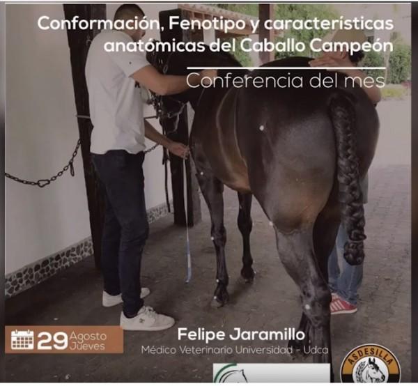 http://suscaballos.com/Vídeo: Conformación ,fenotipo y características anatómicas del caballo campeón