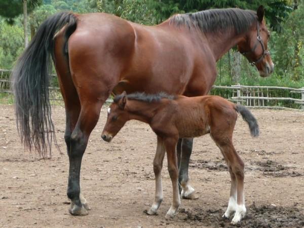 http://www.suscaballos.com/La Nutrición De La Madre Lactante