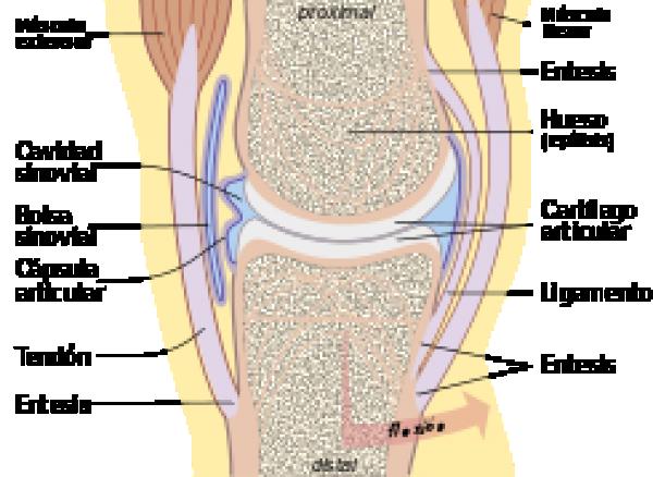 https://suscaballos.com/¿Qué pasa cuando a mi caballo le han diagnosticado osteoartrosis o artrosis?