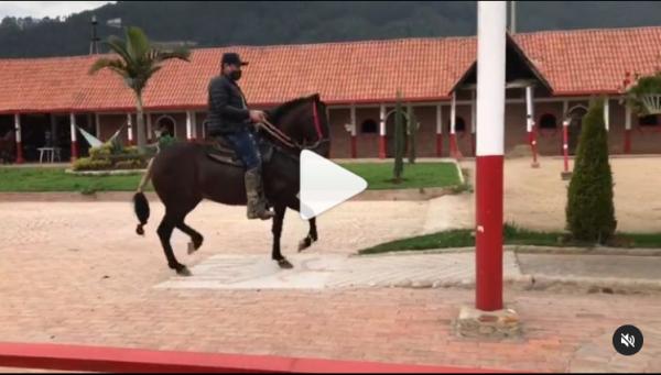 https://suscaballos.com/VIDEO: INCREÍBLE DEL NARANJITO