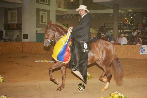 https://suscaballos.com/RESULTADOS XXIX Exposición Equina Grado B Bucaramanga 2018 - TROTE Y GALOPE