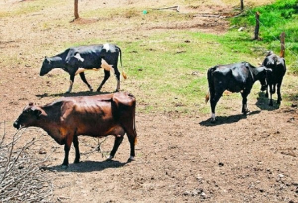 http://suscaballos.com/¿Cómo la deficiencia de nutrientes afecta la reproductividad bovina?