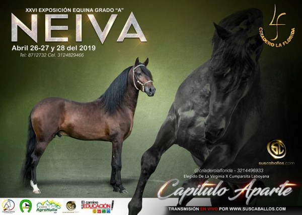 http://suscaballos.com/RESULTADOS XXVI Exposición Equina Grado A Neiva 2019 - TROCHA COLOMBIANA