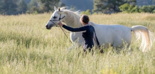 http://suscaballos.com/Conexión mental: cuando tu caballo y tú son uno