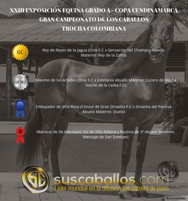 https://suscaballos.com/VÍDEO: Rey de Reyes Campeón, Máximo Reservado, Trocha -Copa Cundinamarca