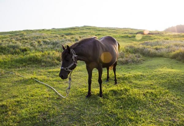 http://www.suscaballos.com/Consejos de doma: Dar cuerda al caballo