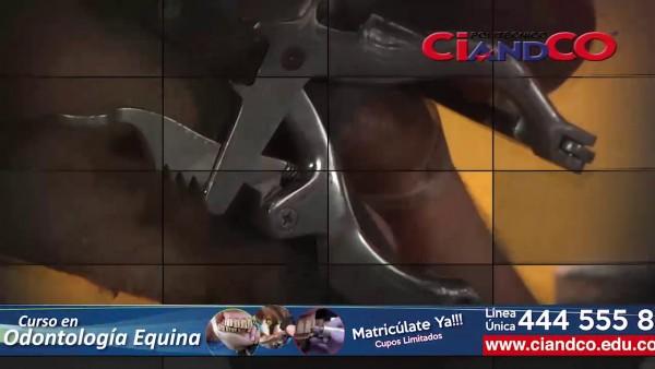 https://suscaballos.com/ Las Técnicas Del Campo: Salud Oral