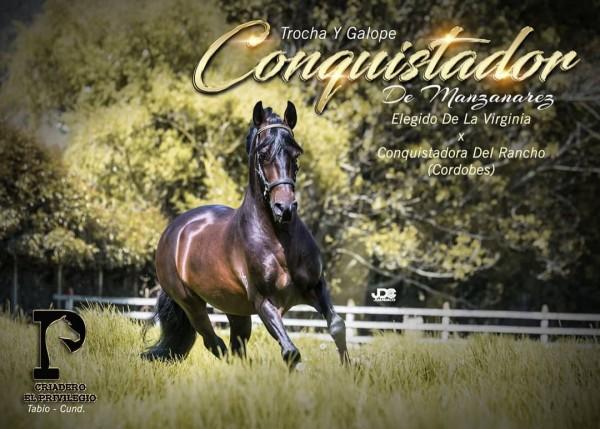 http://suscaballos.com/Resolución 3988 Conquistador de Manzanares,uno de los hijos mas ganadores Elegido de la VirginiaNo registrar ejemplares producto de cruces