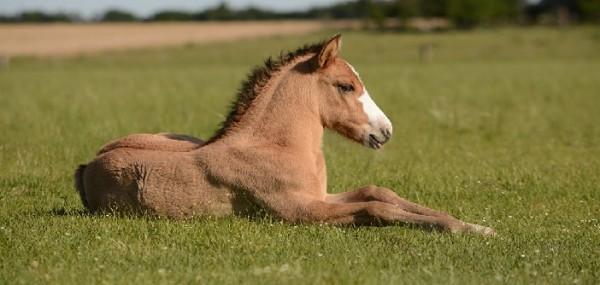 http://suscaballos.com/¿El caballo nace o se hace?