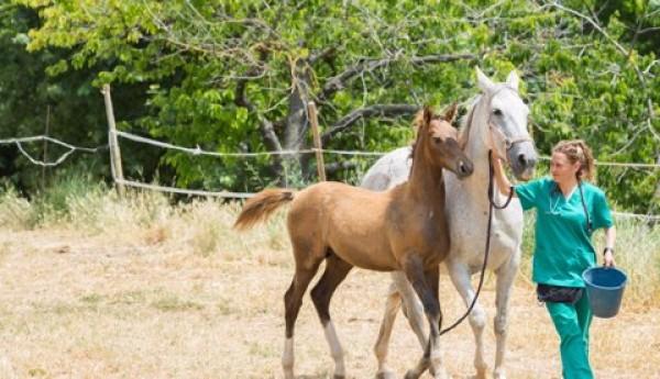 http://www.suscaballos.com/Policryo, Diluyente De Semen Equino Obtiene Patente De La SIC