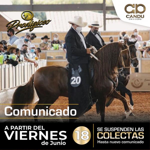 https://suscaballos.com/COMUNICADO PRODIGIOSO TROCHA / CRIADERO CANDU