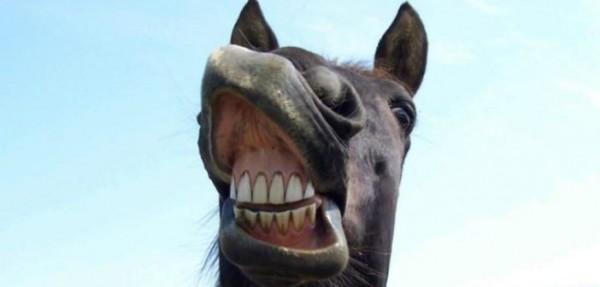 https://suscaballos.com/Qué te puede decir el color de las encías de tu caballo