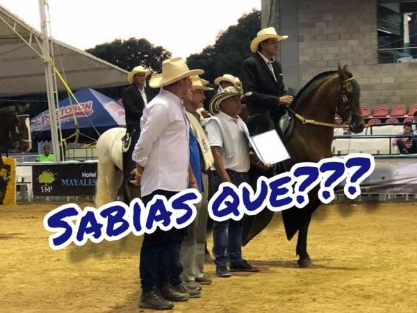 https://suscaballos.com/¿Sabías Qué? Para Un Ejemplar Ser Declarado Fuera De Concurso....