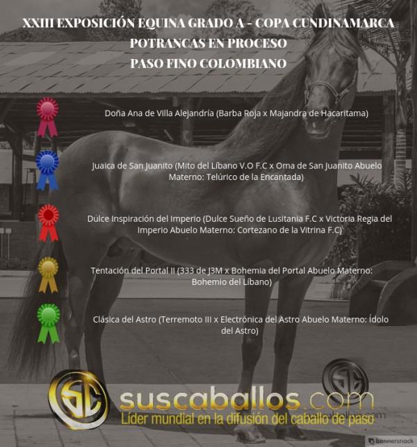 http://suscaballos.com/VÍDEO: Doña Ana Mejor, Juaica 1P, Potrancas Del Paso Fino Col, Copa Cundinamarca