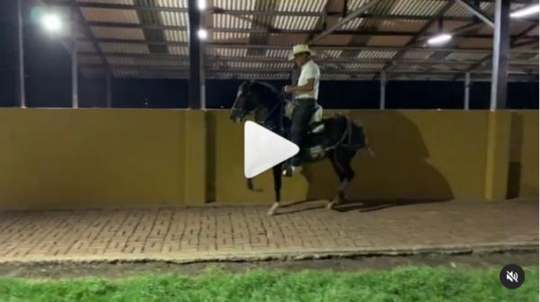 http://suscaballos.com/Video: ASOMBROSA (@onixtrocha x Faraón de GD)