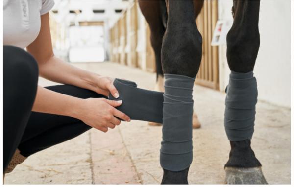 http://suscaballos.com/¿Cómo evitar la cojera de mi caballo?
