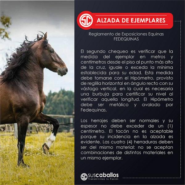 http://suscaballos.com/ALZADA DE EJEMPLARES